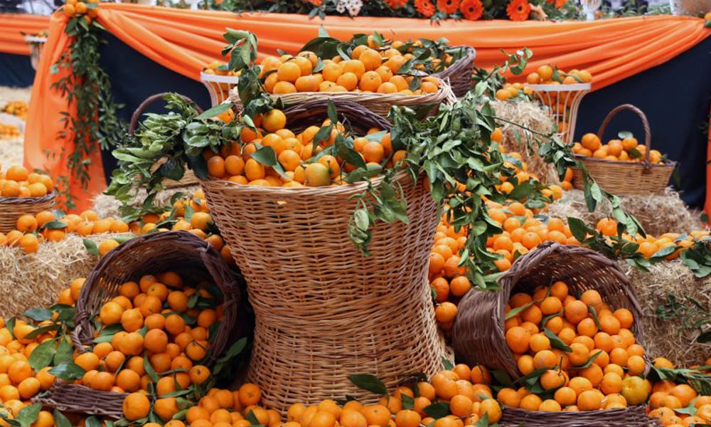 seferihisar mandalina festivali